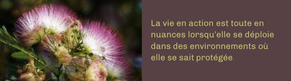 Fleurs de soie_Mircea Iancu_Pixabay